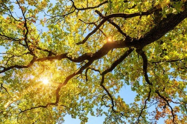 Drzewo Roku na finiszu!