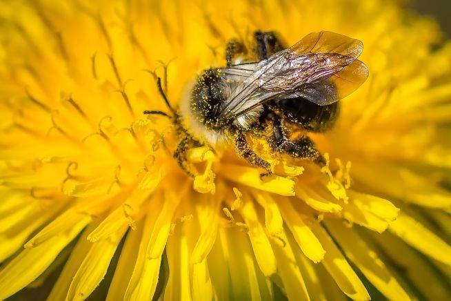 Trzeci Pionkowski Dzień Pszczoły